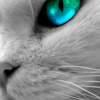 macskaszem társkereső