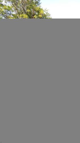 brucee társkereső