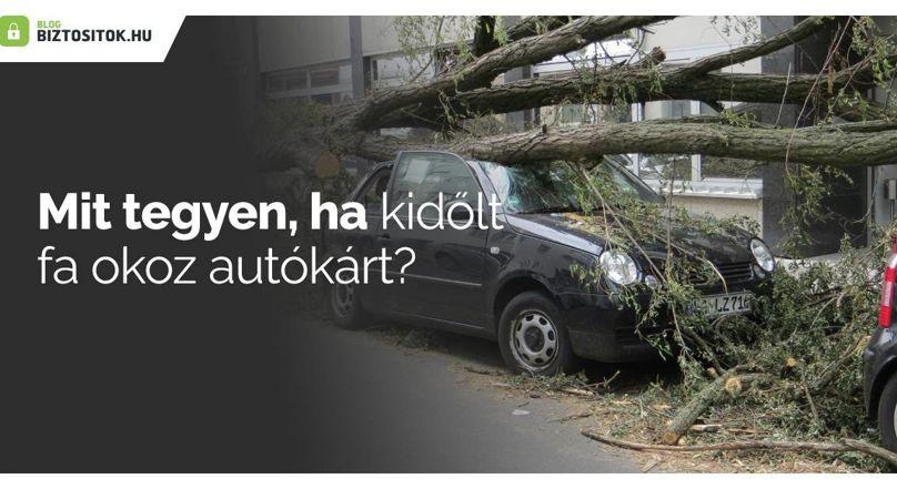 Kidőlt fa által okozott autókár: fizeti a biztosító?