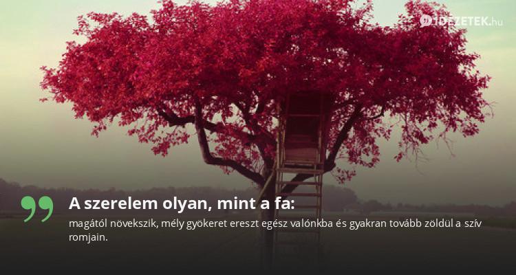 A szerelem olyan, mint a fa: